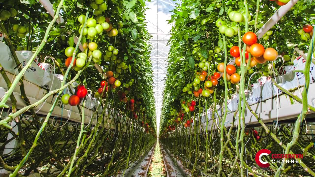 The advantages of cogeneration in a greenhouse