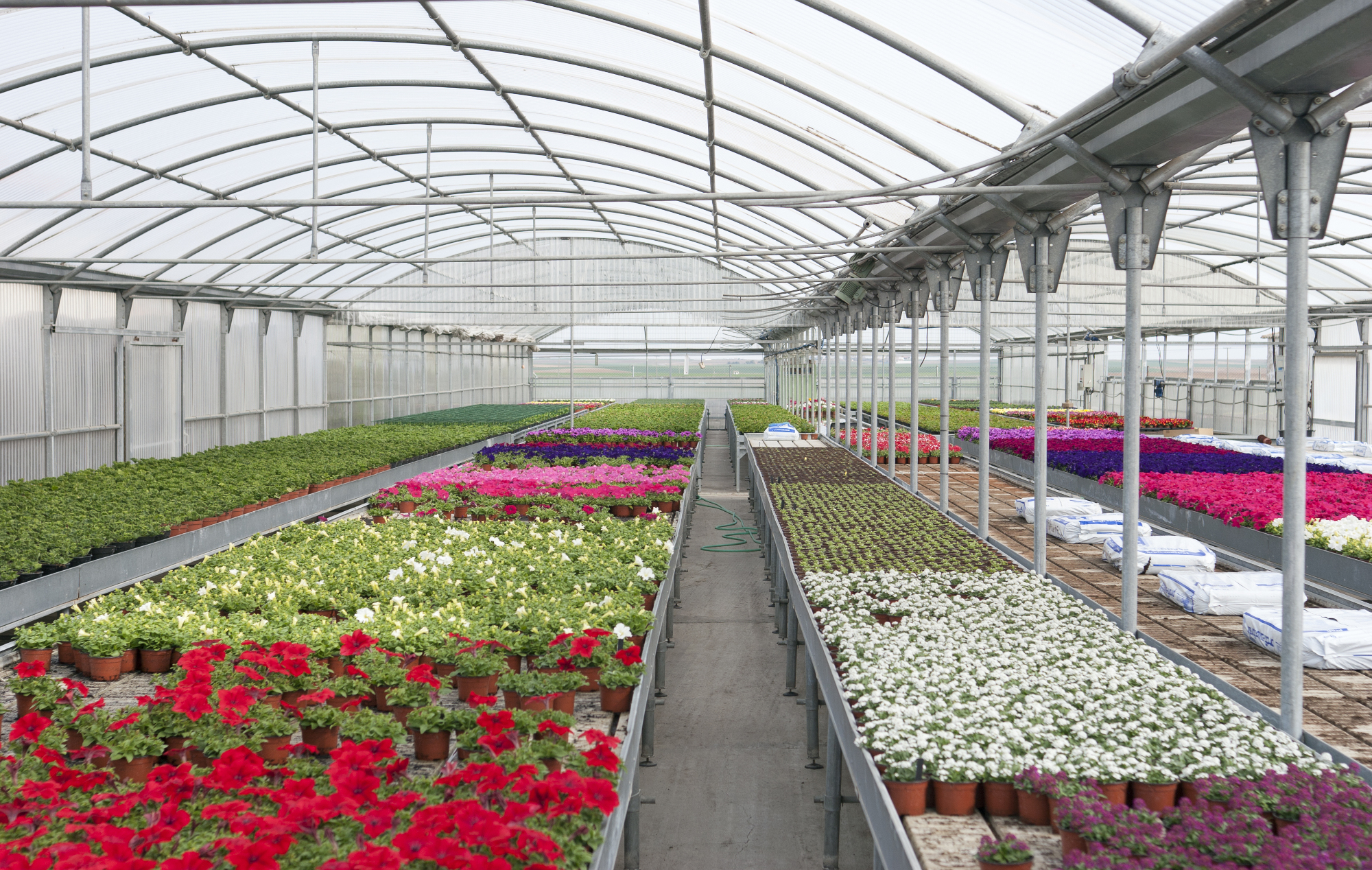 Cogeneration plants in greenhouses. What aspects should be taken into account?