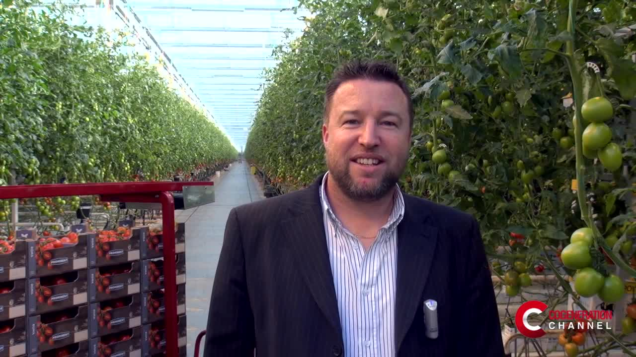 How to improve the yield of greenhouses with cogeneration
